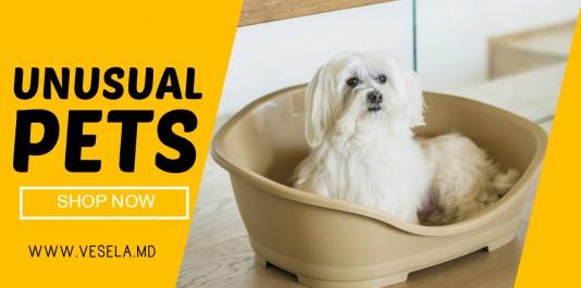 PETS obiecte din masa plastica pentru animalele dragi !